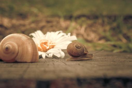 Snail like slow metabolism